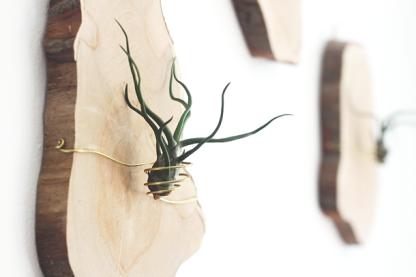 plastry drewna kwietnik na oplątwy