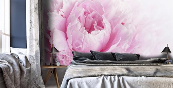 Fototapeta różowa piwonia